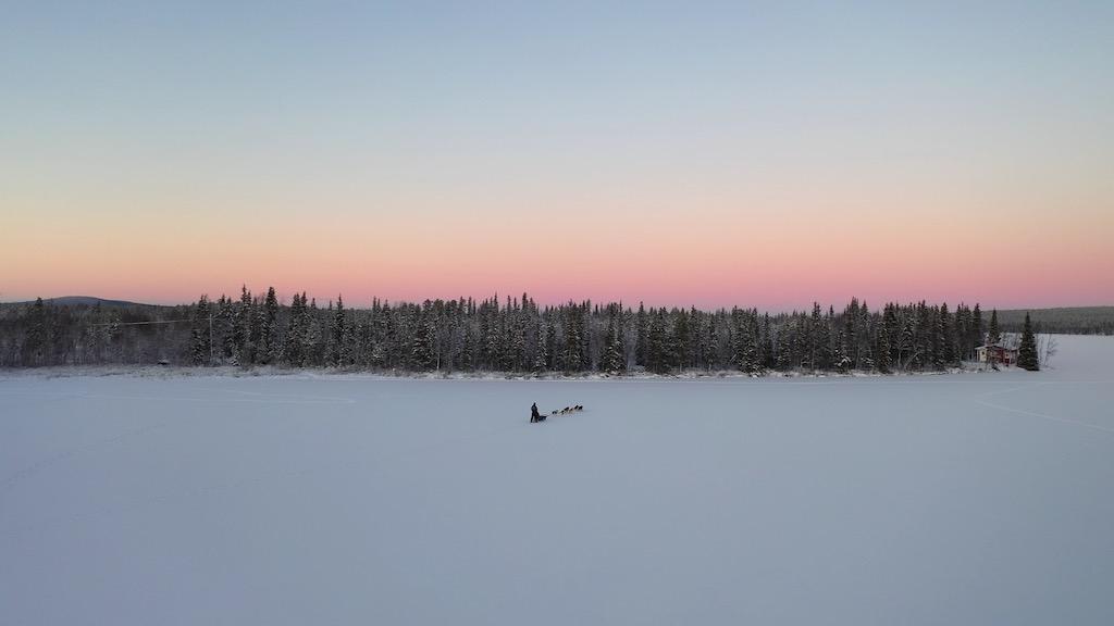 arctic dog sledding
