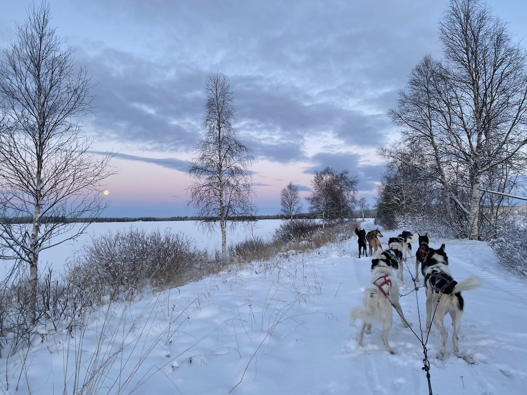 arctic mushing