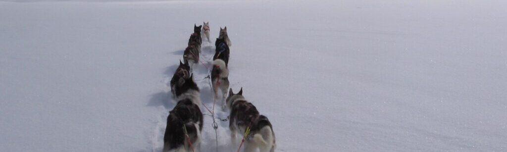 husky-pack