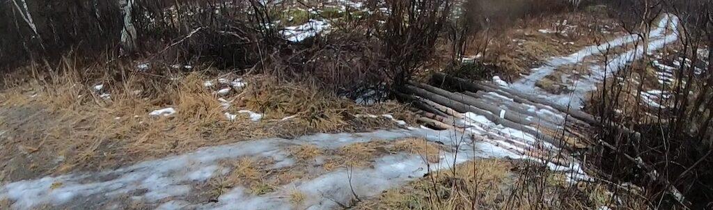 Huskies on icy trails