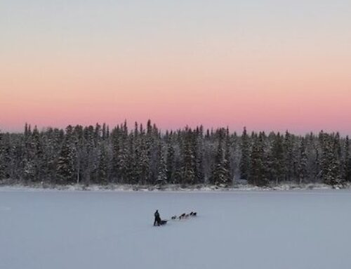 Arctic mushing on a polar night