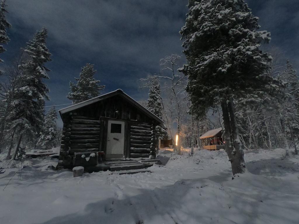 Life in polar night