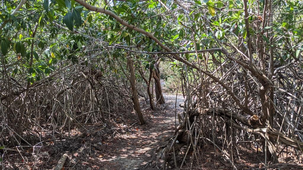 djungel cat trail preparations